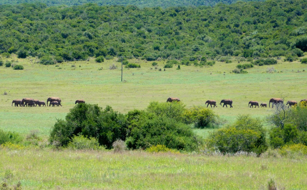 Elephant's of Addo (Africa part 5)